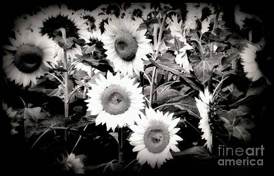 Sunflower Cinema In Black And White Poster by Janine Riley