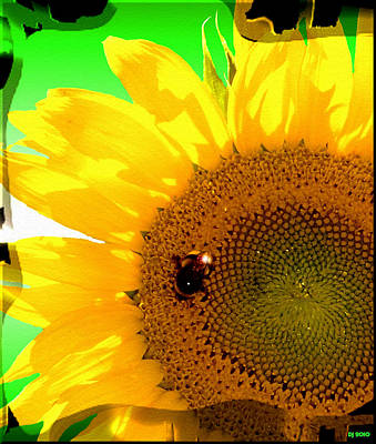 Poster featuring the digital art Sunflower by Daniel Janda