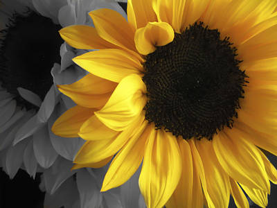Sunflower Days Poster by The Forests Edge Photography - Diane Sandoval