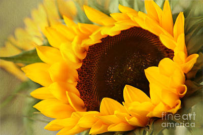 Sunflower Poster by Eden Baed