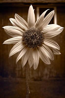 Sunflower Farm B W Poster by Steve Gadomski