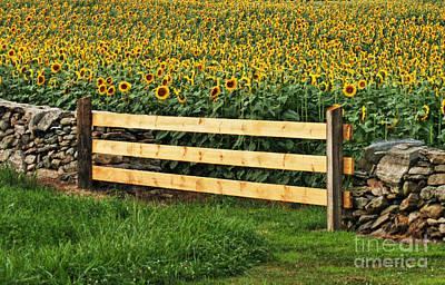 Sunflower Fence Poster by Marcel  J Goetz  Sr