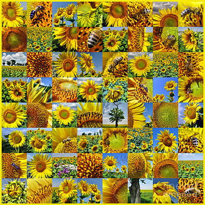 Sunflower Field Collage In Yellow Poster
