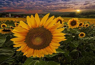 Sunflower Field Forever Poster