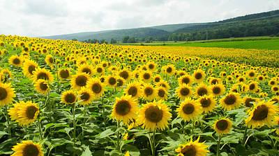 Sunflower Field Poster by Gary Wightman