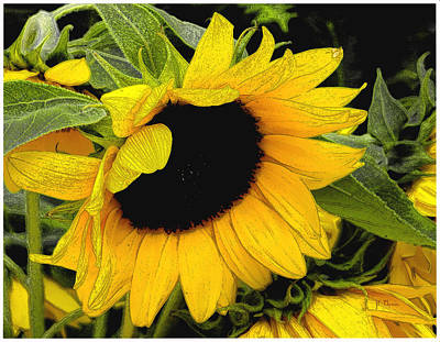 Poster featuring the photograph Sunflower by James C Thomas