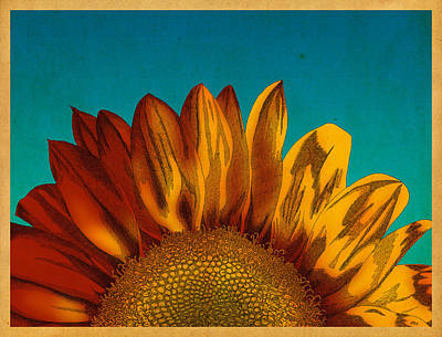 Poster featuring the drawing Sunflower by Meg Shearer