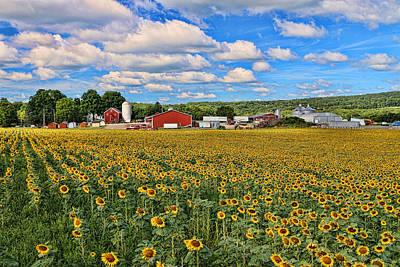 Sunflower Nirvana 17 Poster
