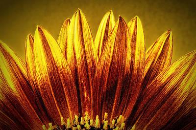 Sunflower Poster by Richard Allen