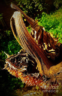 Poster featuring the photograph Sunflower Seedless 2 by James Aiken
