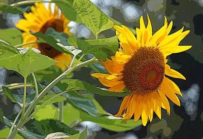 Sunflower Series II - Enhanced Poster by Suzanne Gaff