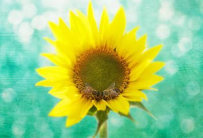 Sunflower - Sun Kiss 2 Poster by John Hamlon