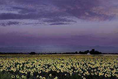 Poster featuring the photograph Sunflower Sunrise by Kristal Kraft