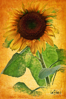 Sunny Sunflower Wall Art Poster