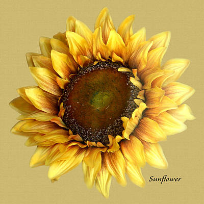Poster featuring the digital art Sunflower by Tom Romeo