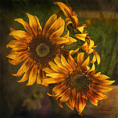 Poster featuring the photograph Sunflower Trio by Priscilla Burgers