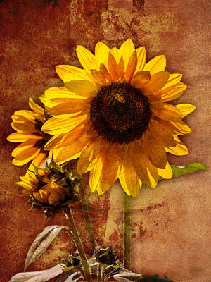 Poster featuring the photograph Sunflower With Bee Number Two  by Bob Coates