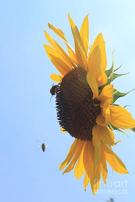 Sunflower With Visitors Poster