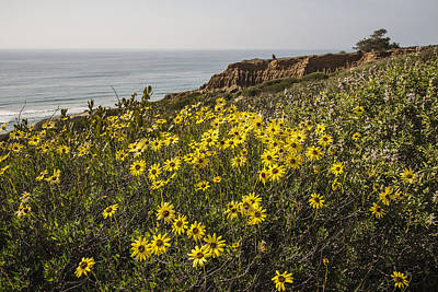 Poster featuring the photograph Sunflowers At Yucca Point by Lee Kirchhevel