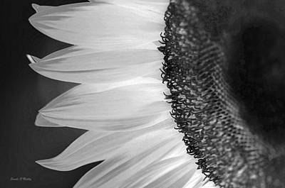 Sunflowers Beauty Black And White Poster