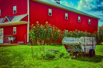 Sunflowers Beside A Big Red Barn Poster