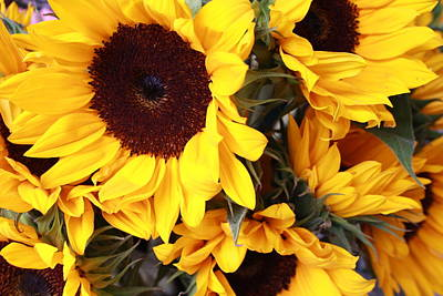 Poster featuring the photograph Sunflowers by Dora Sofia Caputo Photographic Art and Design