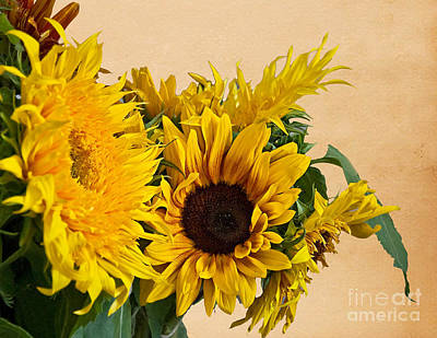 Sunflowers On Old Paper Background Art Prints Poster