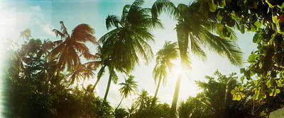 Sunlight Shining Through The Palm Poster by Panoramic Images