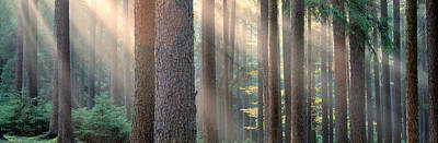 Sunlight Shining Through Trees Poster