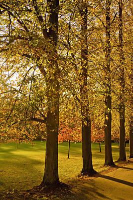 Sunlight Through The Trees In Autumn Poster by Kristi Ewert