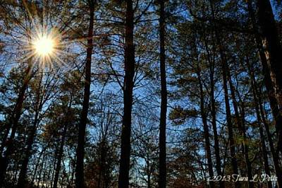 Poster featuring the photograph Sunlight Through Trees by Tara Potts