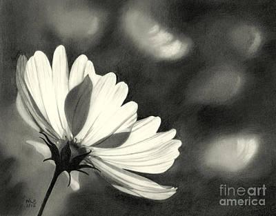 Sunlit Daisy Poster