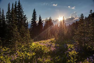 Sunlit Flower Meadows Poster by Mike Reid