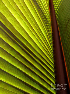 Sunlit Leaf Poster