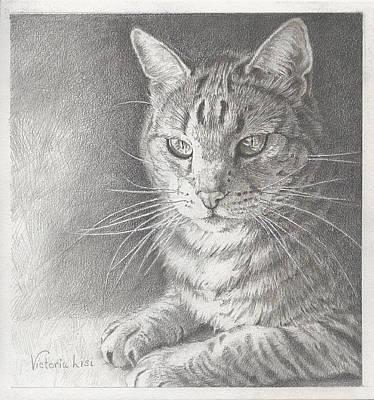 Sunlit Tabby Cat Poster