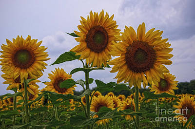 Poster featuring the photograph Sunny Faces by Debra Fedchin