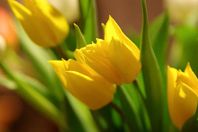 Poster featuring the photograph Sunny Tulips by Erin Kohlenberg