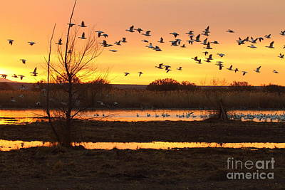 Poster featuring the photograph Sunrise And Geese by Ruth Jolly