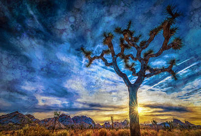 Sunrise At Joshua Tree Stylized Poster by Michael Filippoff