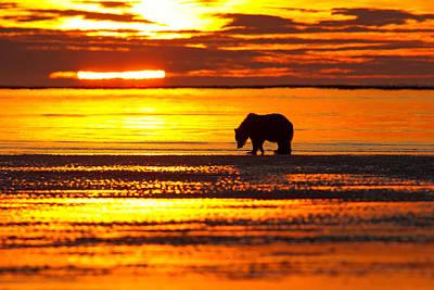 Sunrise Bear Poster
