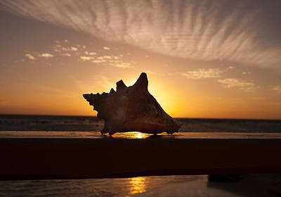 Sunrise Conch Poster by Jean Noren