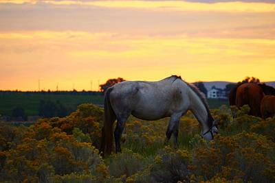 Poster featuring the photograph Sunrise Horse by Lynn Hopwood