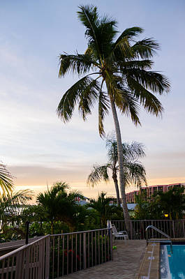 Sunrise Palms Poster