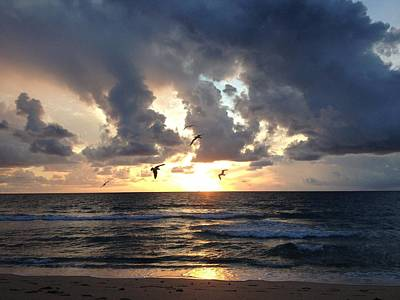 Sunrise Seagulls Poster