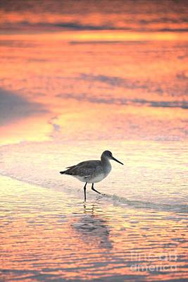 Sunrise Shorebird Poster by Henry Kowalski