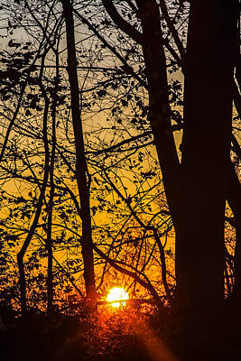 Sunrise Through Trees Poster