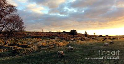 Sunset And Sheep Poster by Merice Ewart Marshall