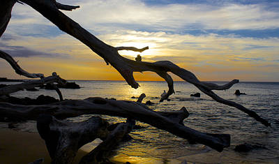 Driftwood At Sunset On Beach '69 Poster by Venetia Featherstone-Witty