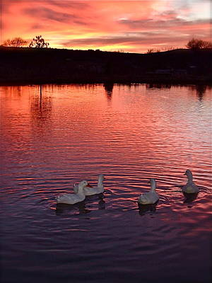 Sunset At Duckpond Poster