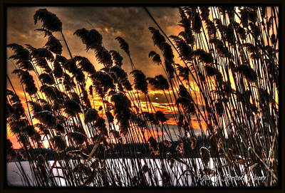 Poster featuring the photograph Sunset At The Pond 5 by Michaela Preston